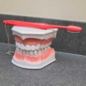 teeth-model-1-300x300 Office Tour